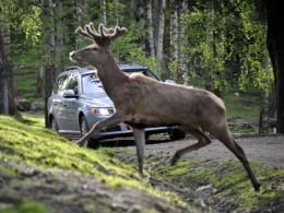 Volvo bude maximálně bezpečné