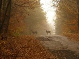 Pozor na zvěř! Nehod na podzim přibývá.